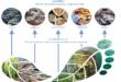 Menelusuri Jejak Ekologi, Melihat Peran Kita pada Penyelamatan Lingkungan